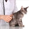 Ветеринарные клиники в Тамбове